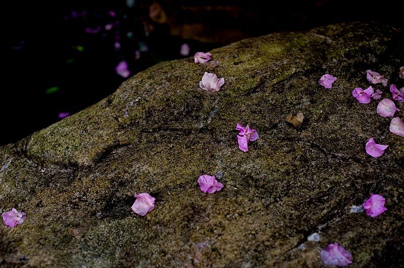 Petals on a rock by a pond