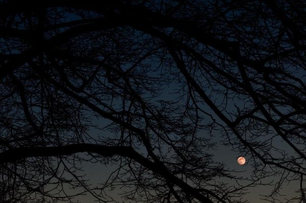 Near full moon over Prospect Park