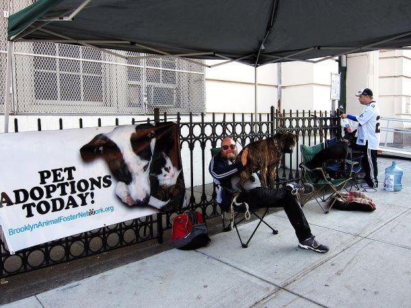 Pet adoption on Seventh Avenue