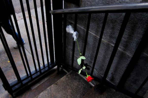 Rose on the fence, St. Franis Xavier Church