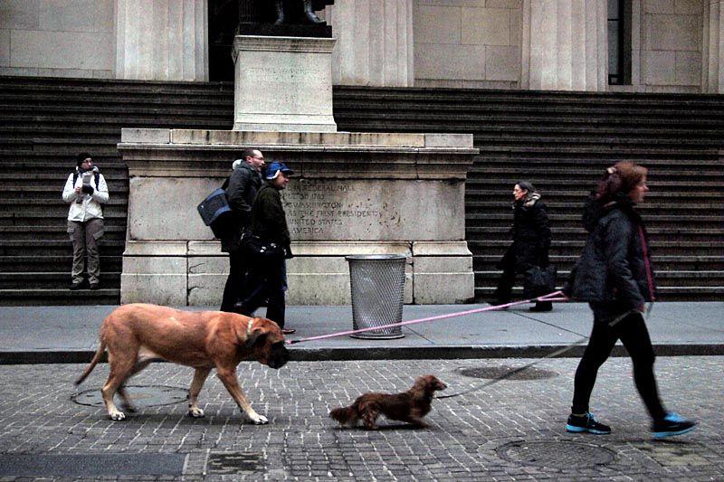 Pets on Wall Street