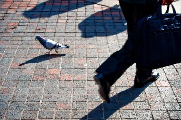 Pigeon in front of Metropolitan Museum of Art