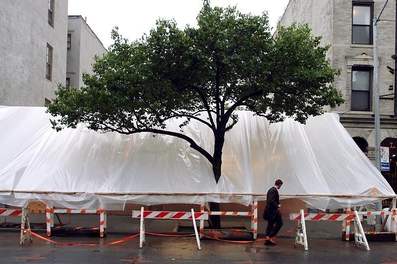 Tree out of tarp on Seventh Avenue sidewalk