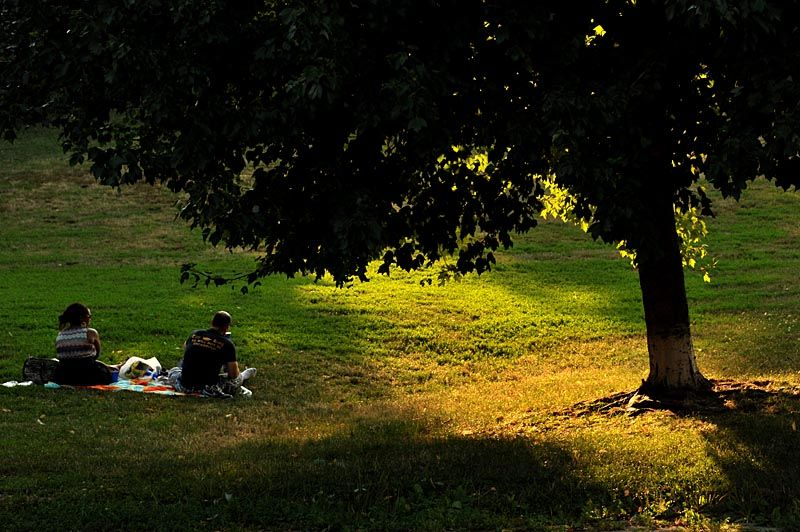Afternoon at Prospect Park