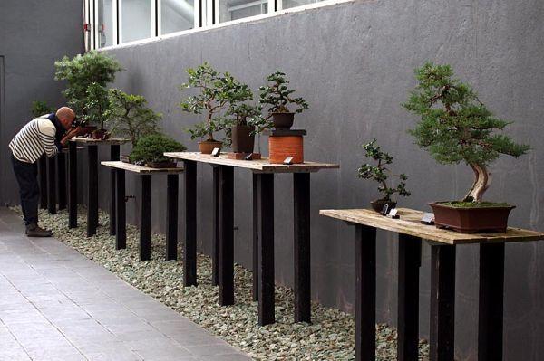 Photographer and bonsai