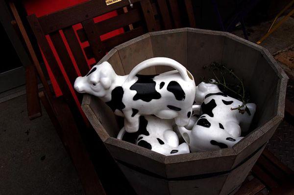 Ceramic cows on Seventh Avenue sidewalk