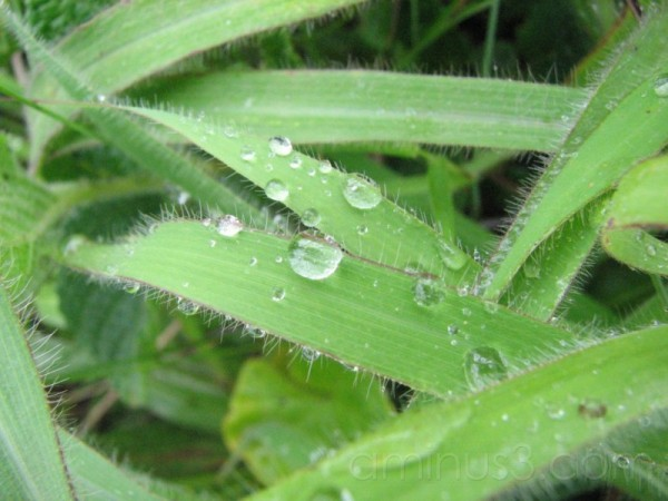 Life is Like Dew Drop