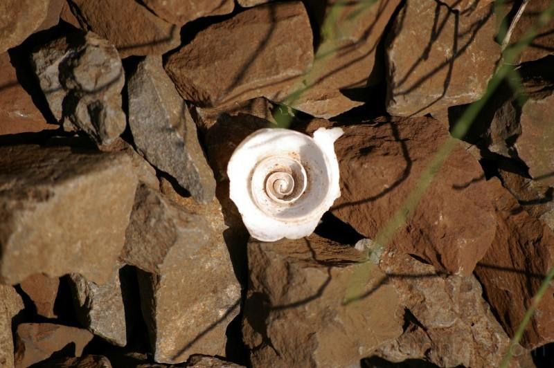 Broken Snail Shell