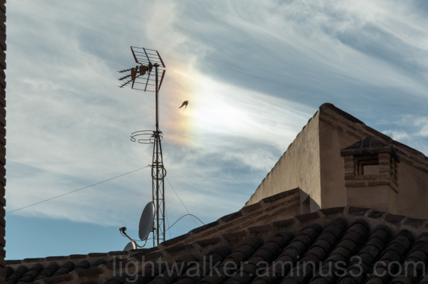 Magpie in parhelion over Toledo