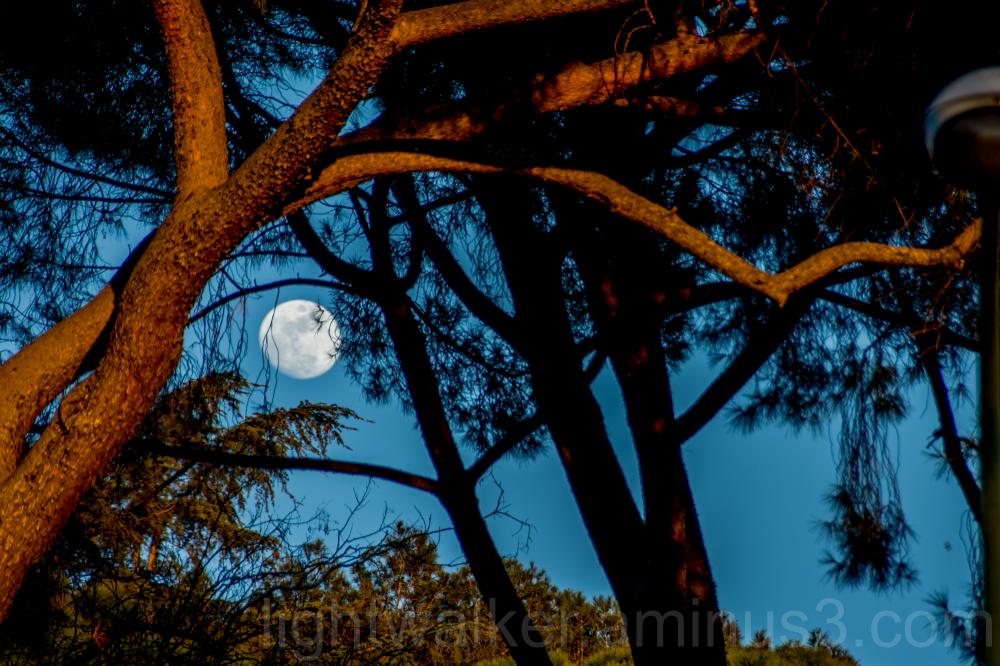 Moon over Retiro trees