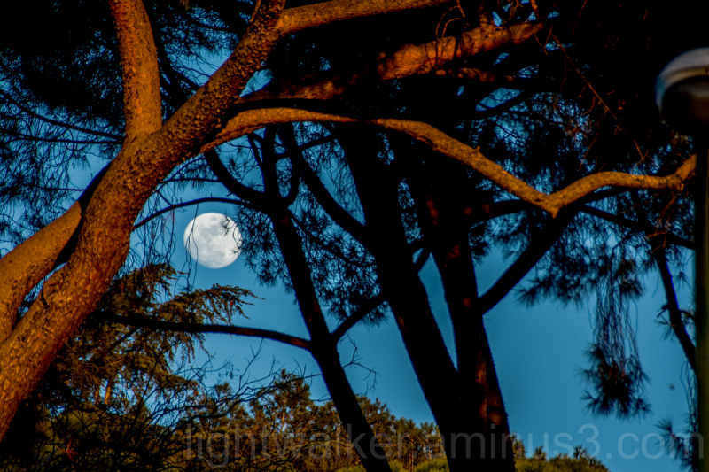 Moon over Retiro trees