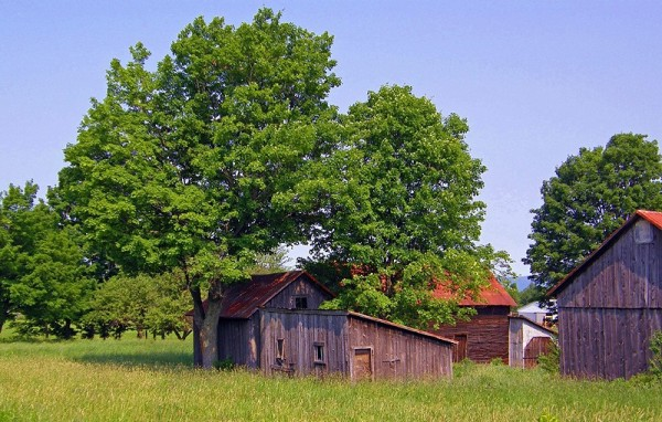 granges parmi les arbres - barns among the trees