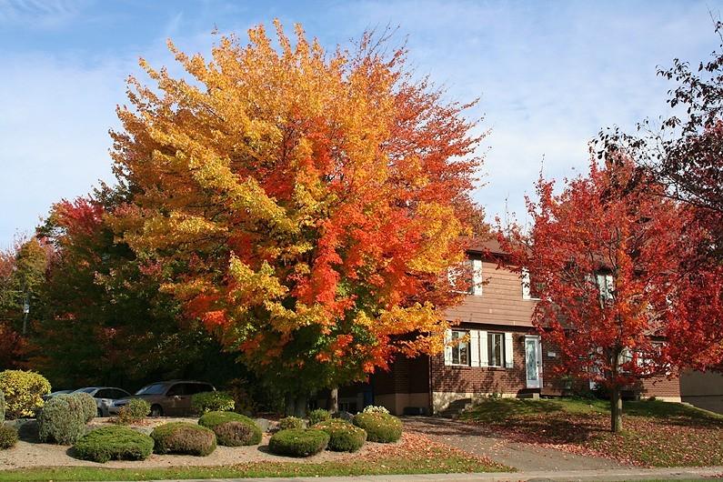 le boulevard leclerc en automne