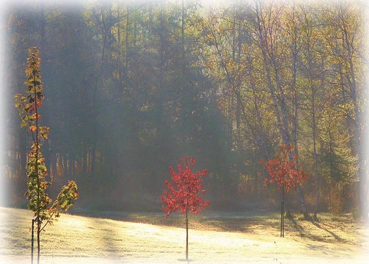 brume matinale d'octobre