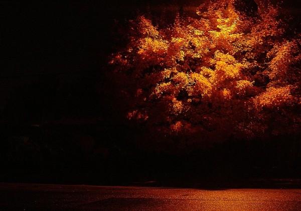 flambée d'automne I - autumn lights I