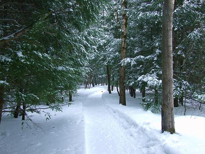 le sentier - the path