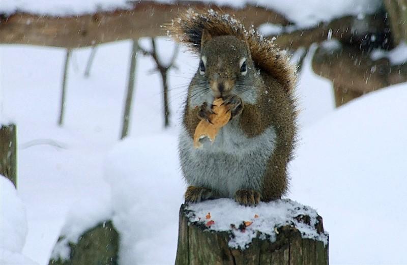 fou des arachides - nut for nuts