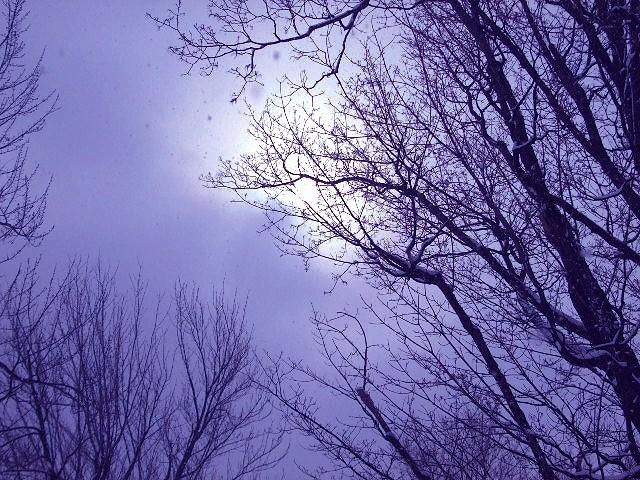 neige II - snow II