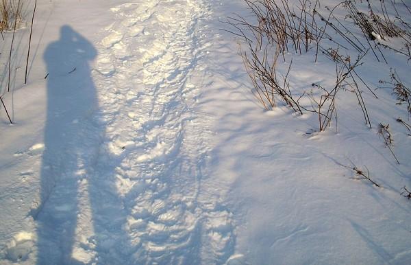 le sentier, au retour - the path at sunset