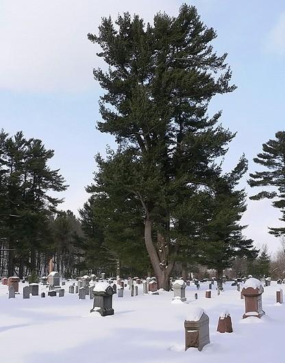 cimetière des anglais - english cemetery