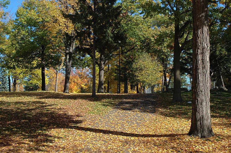 un sentier de feuilles - a trail of leaves
