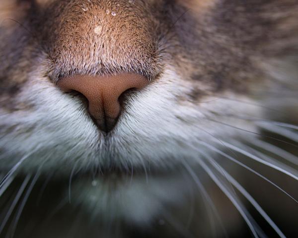 arthur le chat II - arthur the cat II