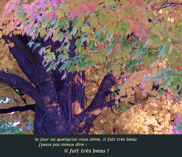 l'automne de la vie - the autumn of life
