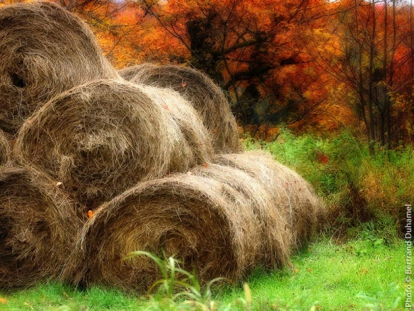 rouleaux de foin - hay rolls