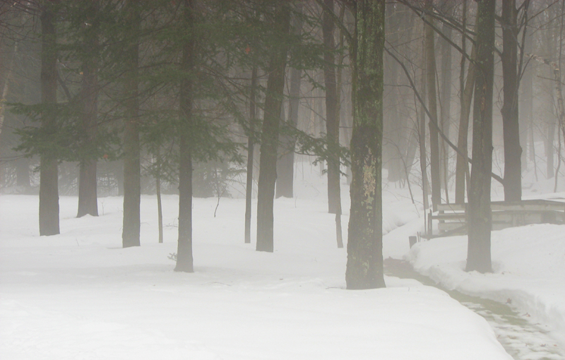 forêt dans la brume - forest in the mist