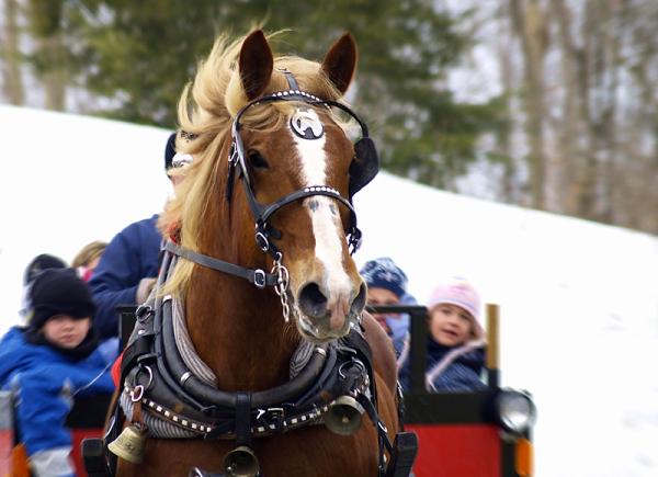 carriole - sleigh