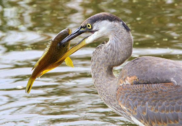 la pêche est bonne aujourd'hui !