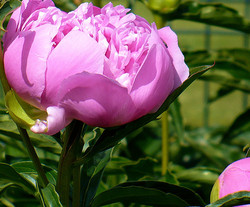 ça sent le printemps ! - that smells like spring!