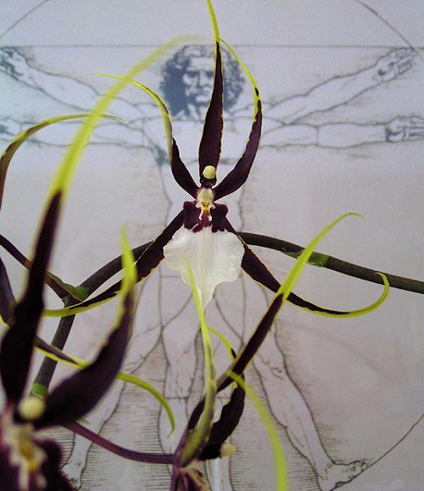 l'araignée de vitruve de Granby