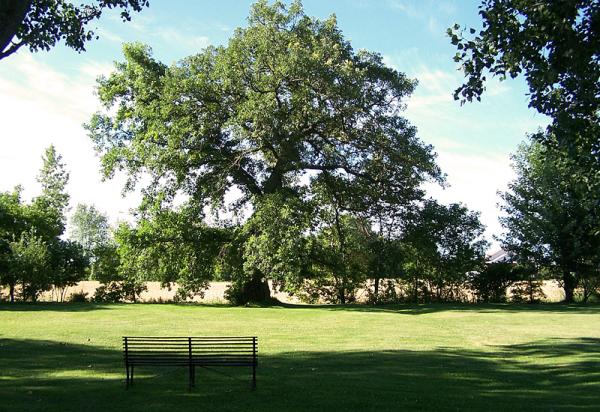 la noblesse du chêne - noble oak