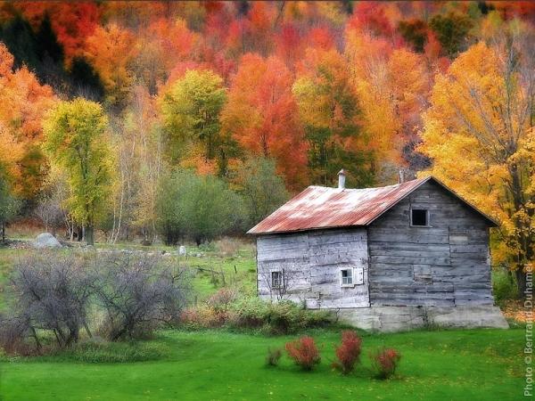 flambée des couleurs d'automne