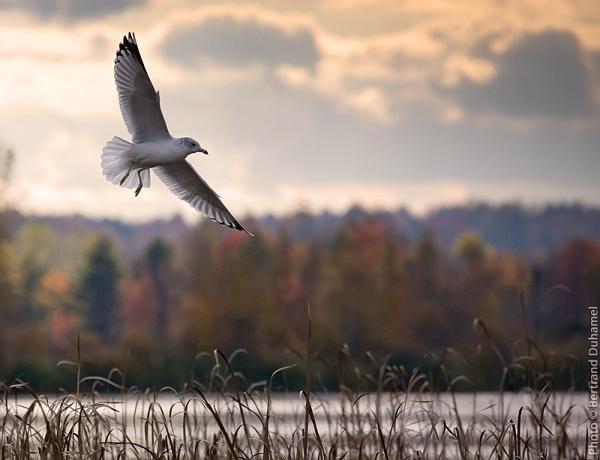 libre comme l'oiseau - free as a bird