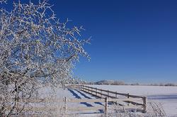 les grandes gelées d'hiver   great winter frosts