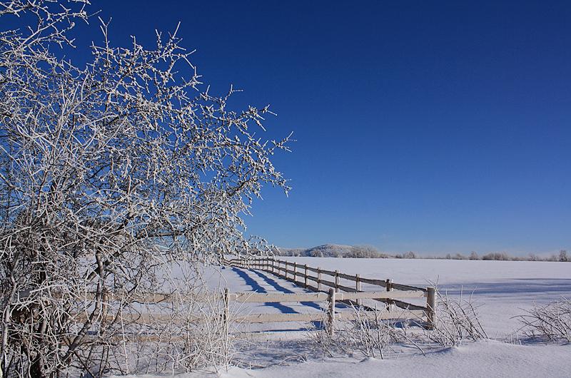 les grandes gelées d'hiver - great winter frosts