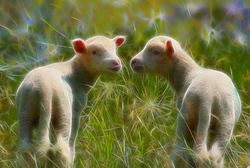 l'amour est dans les prés - love is in the fields
