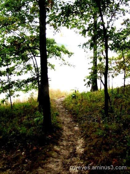 Hidden Spring Forest, IL