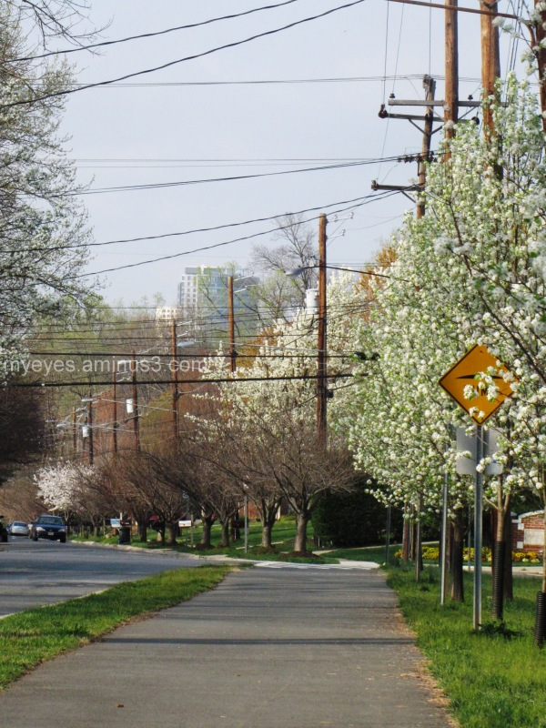 Spring Bethesda