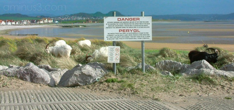 Danger, goats on the beach at West Shore Llandudno