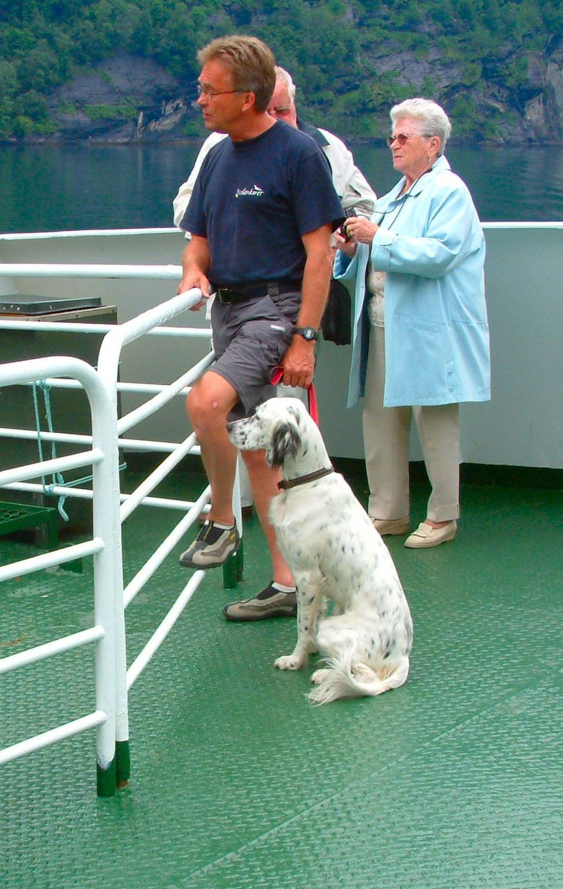 dalmatian on the ferry from hellesylt to geiranger