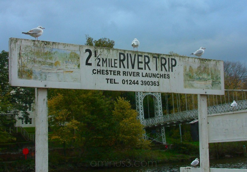 gulls on a sign at Chester