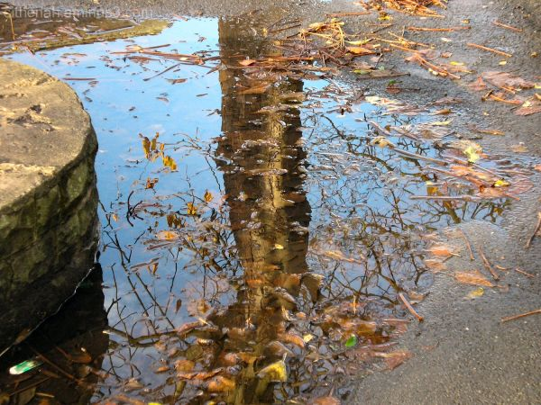 Tree in a puddle