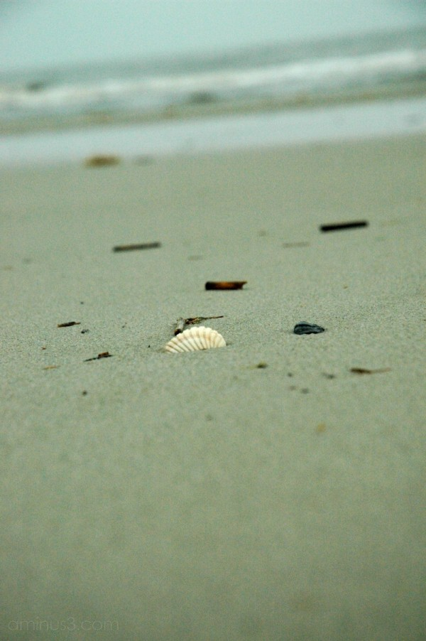 sand and seashells on hilton head south carolina