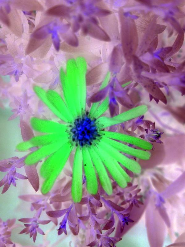 Green Flower?!!