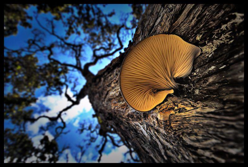 Volcanic Mushroom
