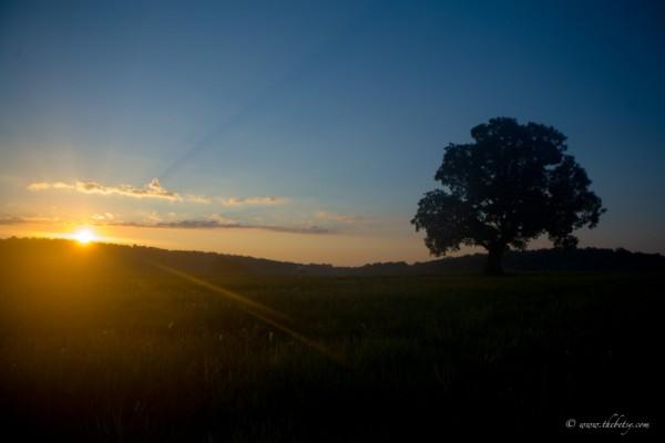 sunrise mcafee farm glenmoore pa landscape