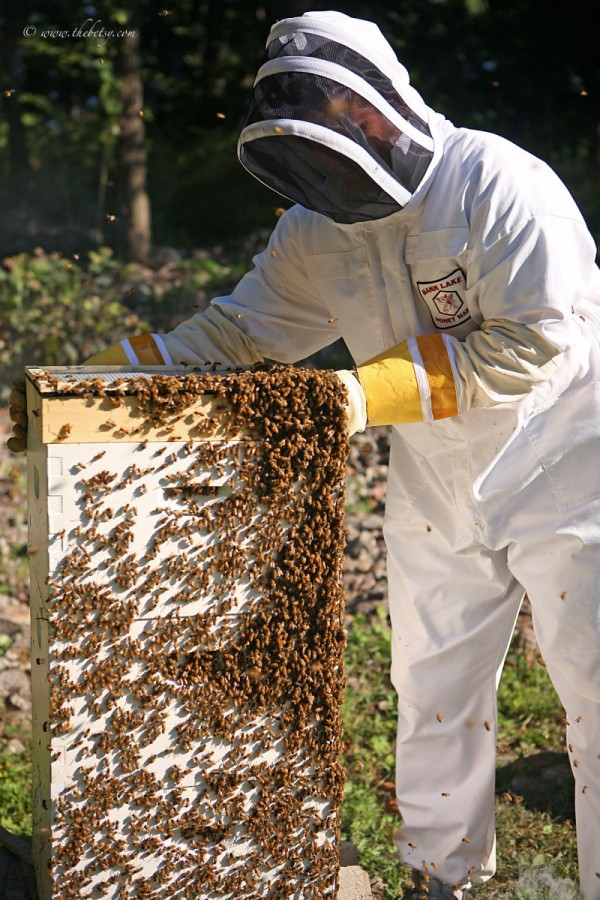 honey harvest apiary bees glenmoore